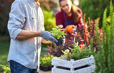 Choix de plantes